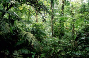 Interior of Rain Forest, Costa Rica, Michael Fogden/Earth Scenes, Microsoft(R) Encarta(R) 98 Encyclopedia, (c) 1993-1997 Microsoft Corporation.